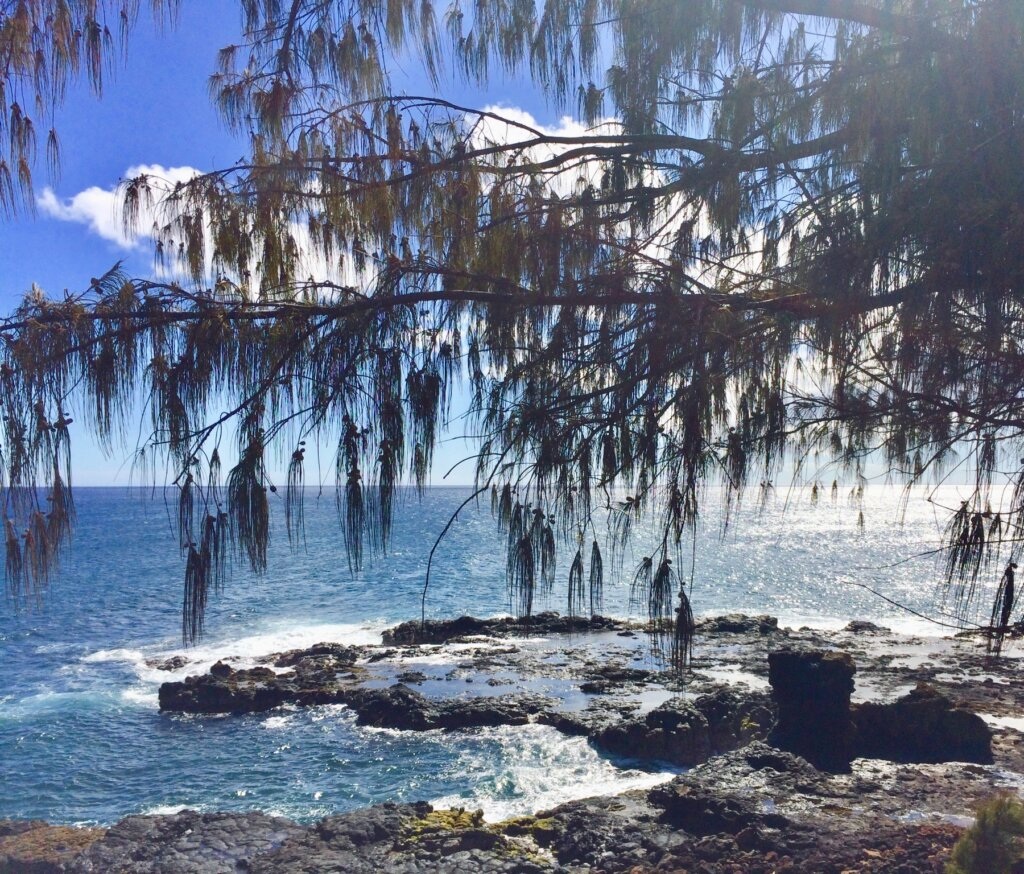 green pine needled trees stretched over the black lava cliffs of Poipu's beaches