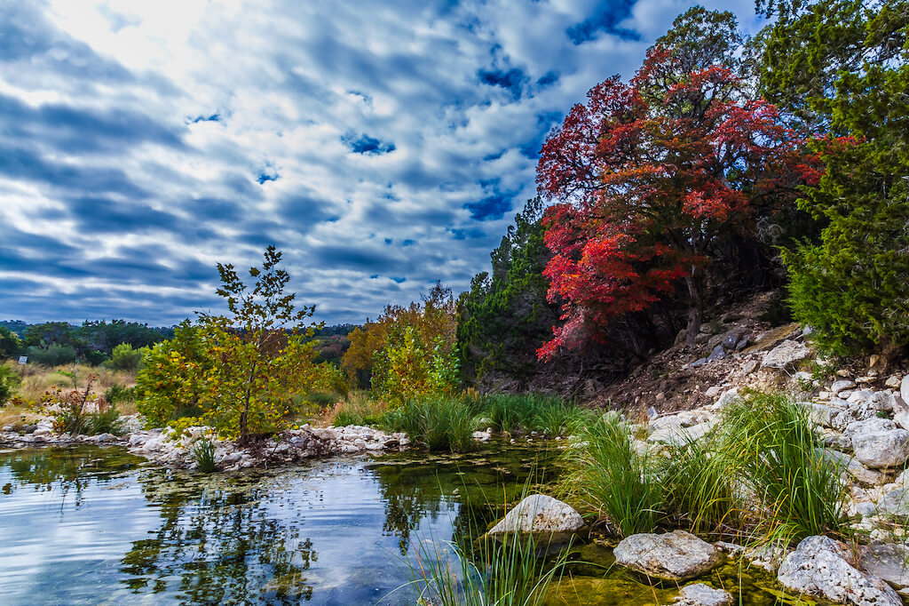 Bright red tree and dramatic clouds over pond