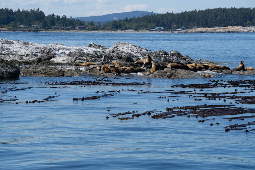 seals huddled on an island in the sea