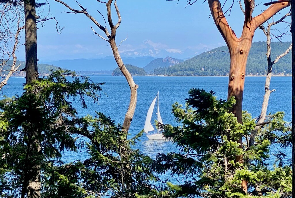 sailboat on a bay through the trees