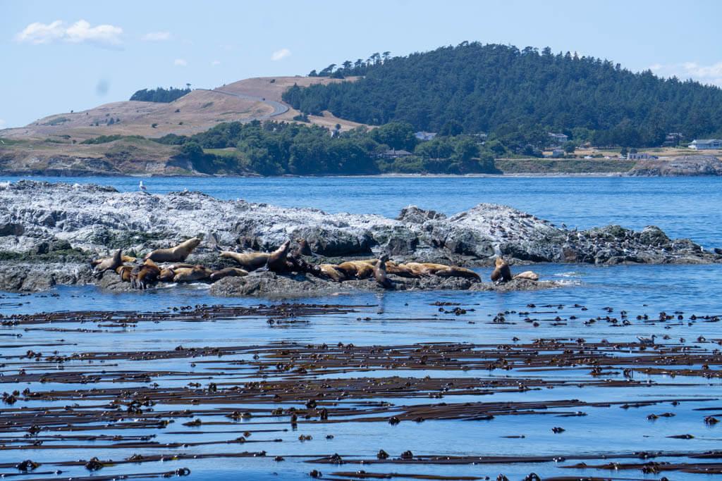 seals sunning on a rock