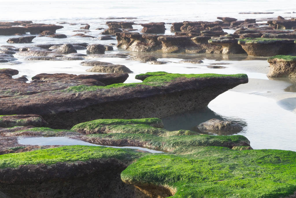 mossy covered tidepools