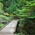 footpath bridge in beautiful forest
